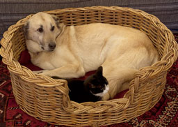 Rattan Dog Baskets from Kosmopolitan