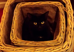 zig in basket