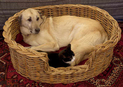 Wicker Dog Baskets