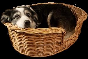 Kosmopolitan Dog Basket with Teddy