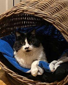 Moggie in cat basket