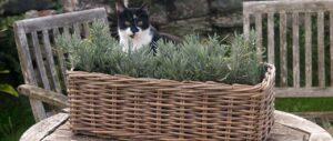 Kosmopolitan Garden Baskets